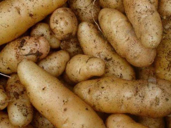 Pommes de terre & oignons